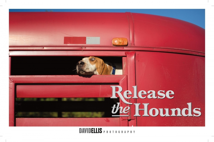 Release the Hounds-01-2.jpg